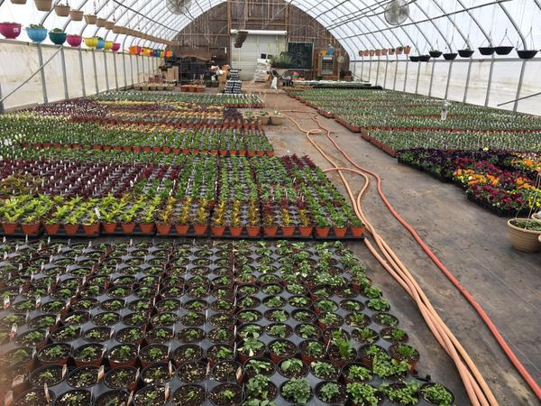 Greenhouses are filling up!  We still have a couple more to go