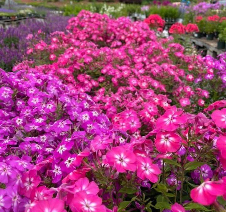 Perennials Galore!
