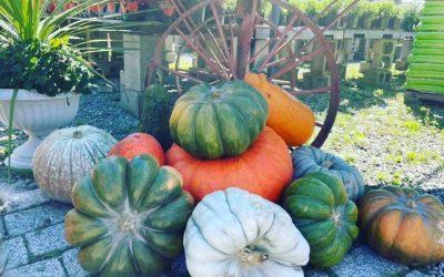 Pumpkins! 🎃